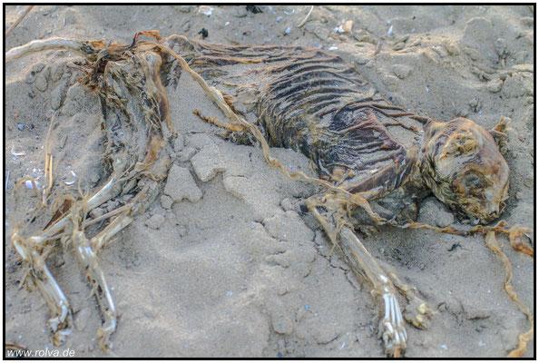 Mumifizierte Katze#Strandfund#Sonderbares