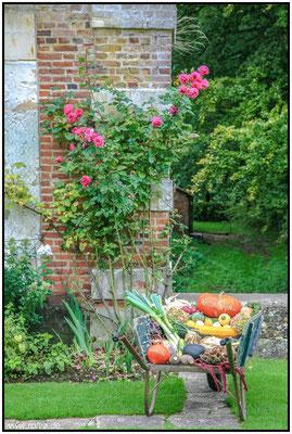 Château de Miromesnil #Schloßgarten#Normandie#Herbststilleben