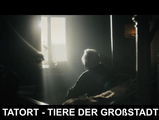 """Horst Westphal in """"Tatort - Tiere der Großstadt"""" (© Max Knauer)"""