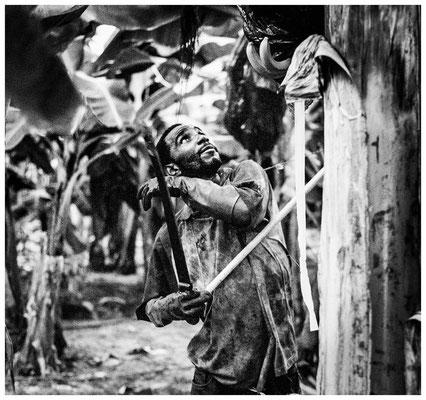 Plantagenarbeiter (©Max Knauer)