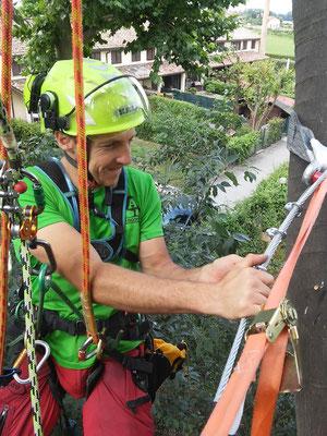 Consolidamento statico con cavo in acciaio su bagolaro eseguito con tecnica tree climbing - Marco Montepietra