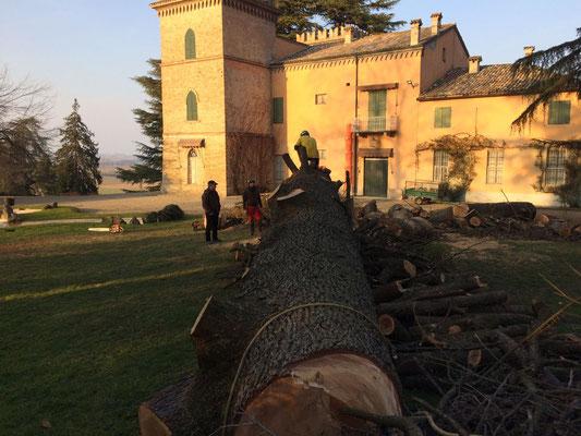 Grande tronco di cedro abbattuto - Marco Montepietra e Vittorio Lombatti