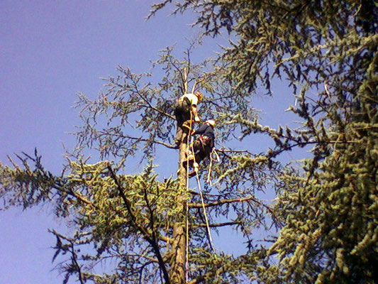 Esercitazione di soccorso in quota durante operazioni in tree climbing - Marco Montepietra