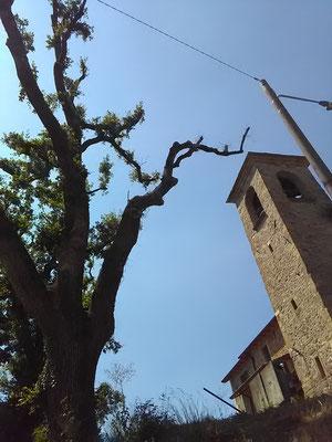 Vecchie querce ridotte a scheletri senza motivo: un esempio di come impoverire il paesaggio.