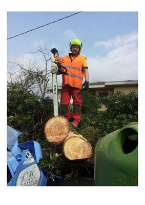 Rimozione di un pino caduto sulla strada in seguito a forti venti - Marco Montepietra