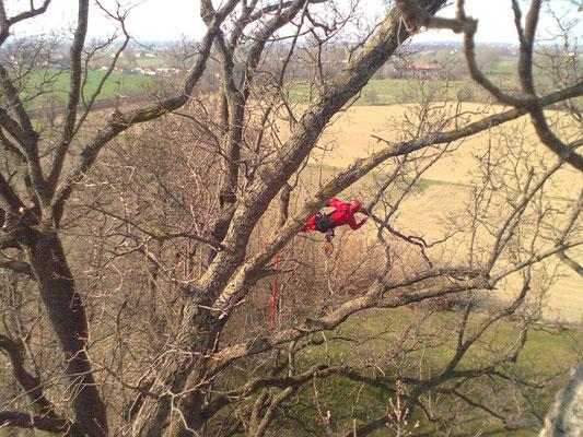 Potatura di quercia secolare con tecnica tree climbing - Marco Montepietra