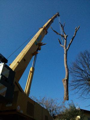 Struttura principale di pino sollevata interamente da una autogru in seguito a crollo