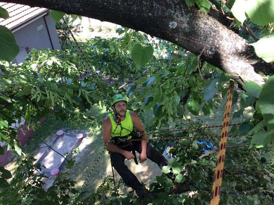 Potatura su tigli presso una scuola materna con tecnica tree climbing - Marco Montepietra