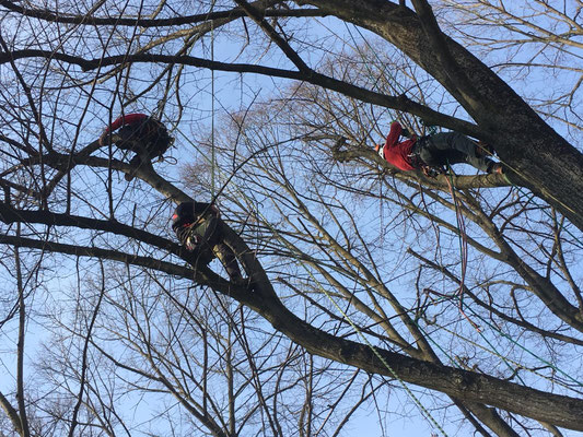 Allievi durante prove di movimentazione in pianta - Corso di Tree climbing tenuto da Arbonauti presso il Parco della Cittadella, Parma