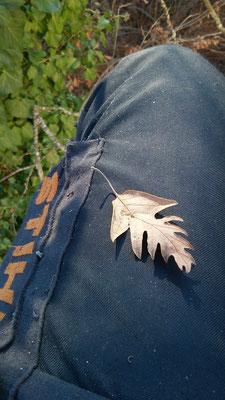 Pantaloni antitaglio Stihl per l'utilizzo della motosega - Marco Montepietra