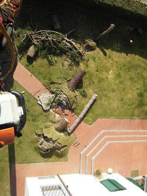 Operazioni di abbattimento controllato di un pino con tecnica tree climbibg - Marco Montepietra