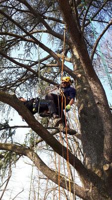 Allievi effettuano manovre di soccorso in pianta - Corso di Tree climbing tenuto da Arbonauti presso il Parco della Cittadella, Parma