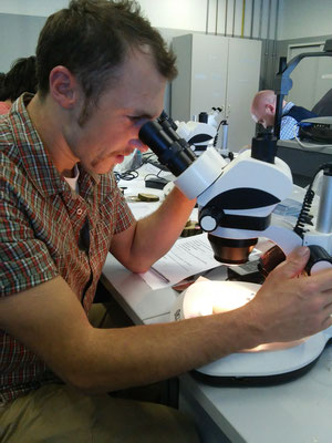 Studio dei tessuti legnosi al microscopio durante corso _ Marco Montepietra