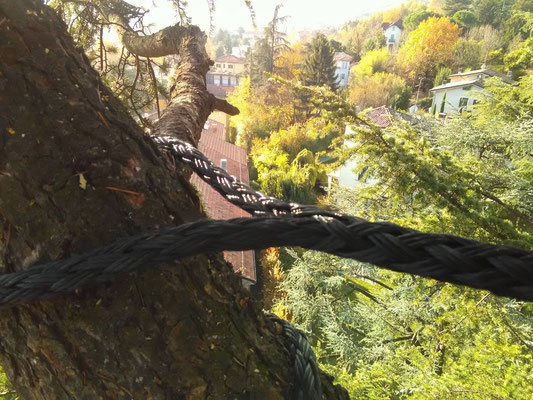 Dettaglio dell'asola non invasiva in un consolidamento su cedro