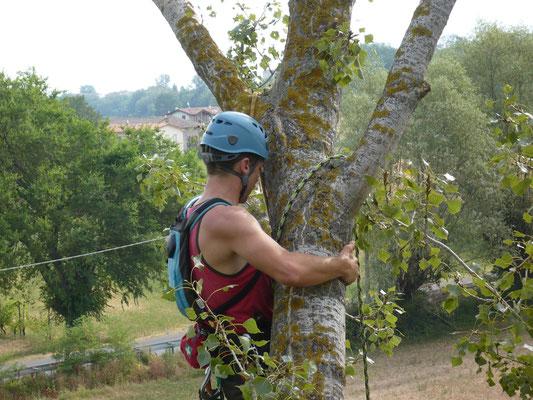 Fase di accesso per consolidamento su pioppo con tecnica tree climbing - Marco Montepietra