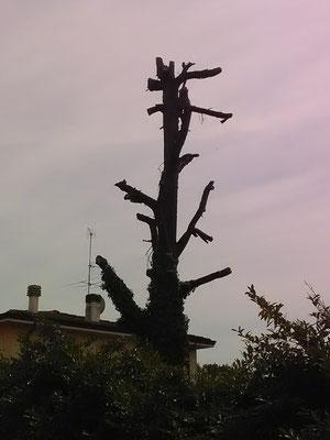 Distruzione dell'albero.