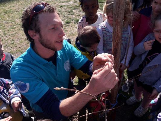 Lezione sugli alberi presso scuola materna - Marco Montepietra - Parma