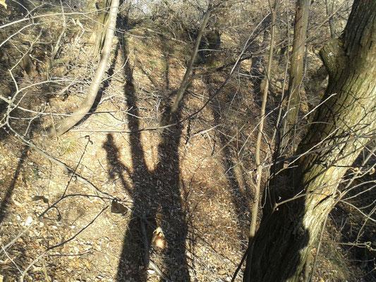 Ombra; potatura in un castagneto con tecnica tree climbing - Marco Montepietra