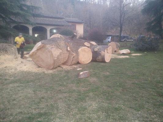 Grandi sezioni di tronco in seguito all'abbattimento di un cedro secolare disseccato - Marco Montepietra