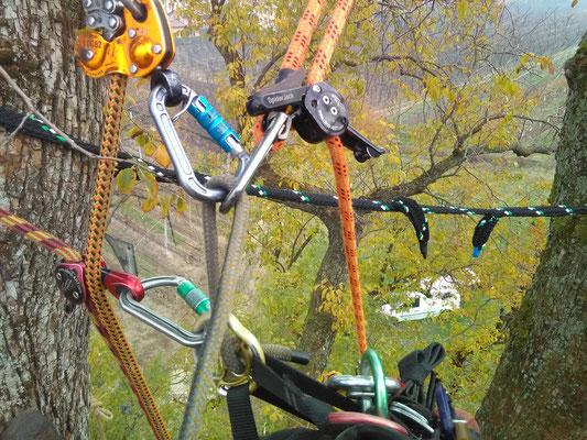 Dispositivi D.P.I. specifici per il tree climbing - Marco Montepietra