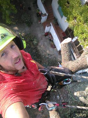 Abbattimento controllato di un cedro con tecnica tree climbing - Marco Montepietra