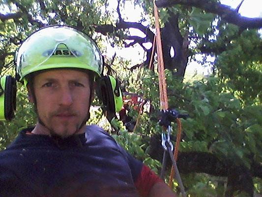 Potatura su quercia secolare con tecnica tree climbing - Marco Montepietra