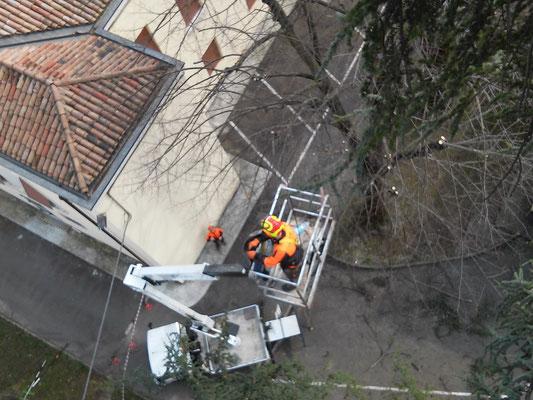 Potature effettuate in combinazione con  tecnica tree climbing e piattaforma di lavoro elevabile
