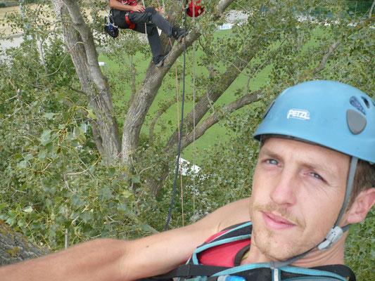 Fase di lavoro durante il consolidamento di un Pioppo con tecnica tree climbing - Marco Montepietra
