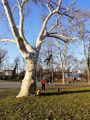 Allievi durante prove di risalita - Corso di tree climbing tenuto da Arbonauti presso il Parco della Cittadella, Parma