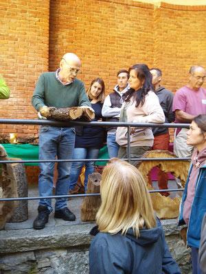 Lezione di anatomia e fisiologia dell'albero durante corso - Daniele Zanzi