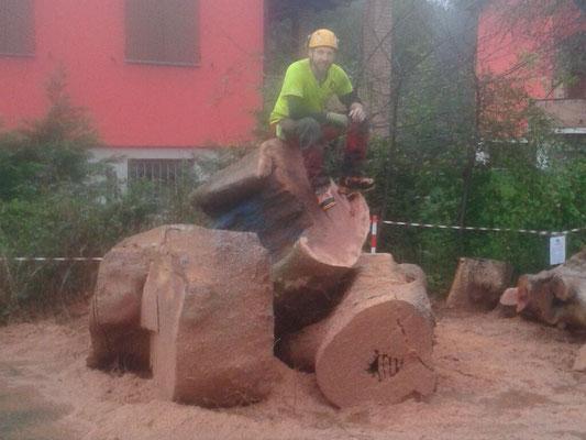 Grandi sezioni di tronco in seguito all'abbattimento di un platano secolare disseccato - Marco Montepietra