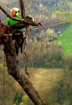 Potatura di un vecchio mandorlo in tree climbing - Marco Montepietra