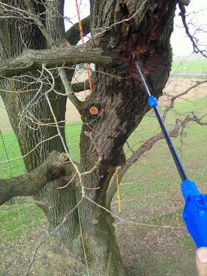 Trattamento fitosanitario in quota contro insetti xilofagi