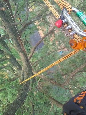 Dispositivo D.P.I. specifico per il tree climbing - Marco Montepietra