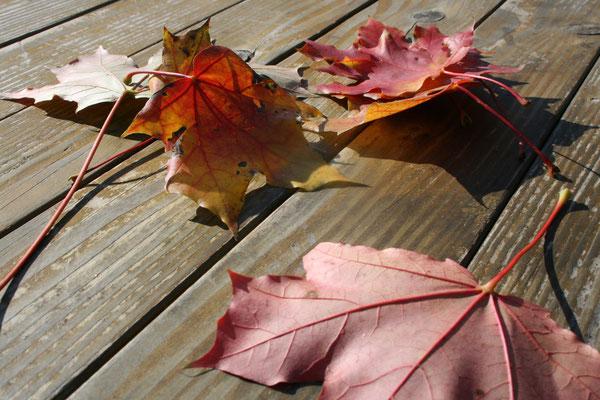 Blätter reisen... wohin der Wind sie trägt.