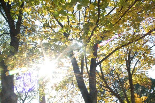 goldene Blätter im Sonnenschein