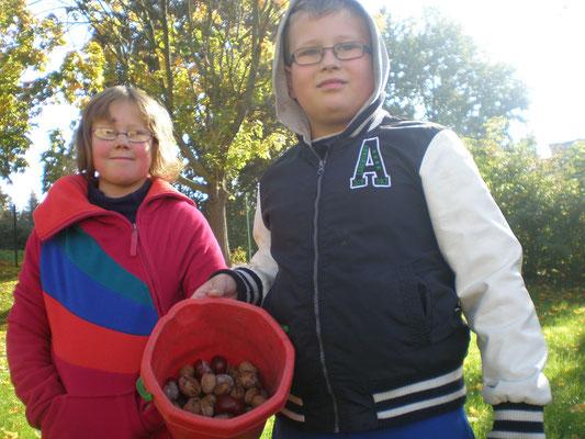 Wir sammeln Kastanien und Nüsse.