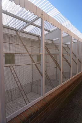 Umbau Außenvoliere - Schritt 8: Sitzstangen und Leitern werden eingesetzt
