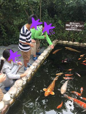 鯉がいました