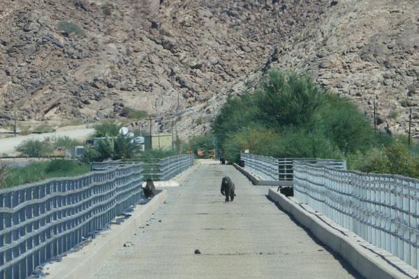 """Auf der Brücke über den Oranjeriver im Niemandsland zwischen Namibia und Südafrika zusammen mit """"einheimischen Schmugglern"""""""
