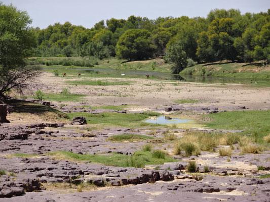 Seltener Anblick: das Flußbett enthält noch etwas Wasser
