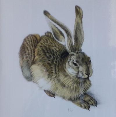Dürer-Hase