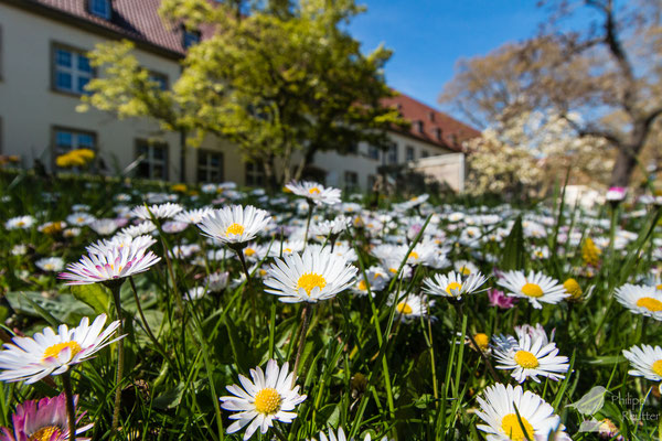 Frühling in Mainz
