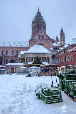 Markttag unter dem weißen Mainzer Dom
