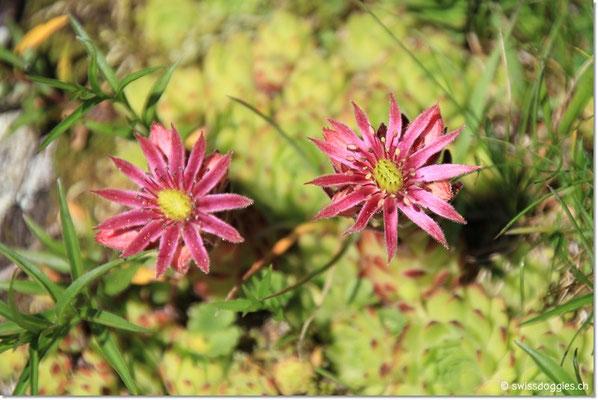 Blumen -