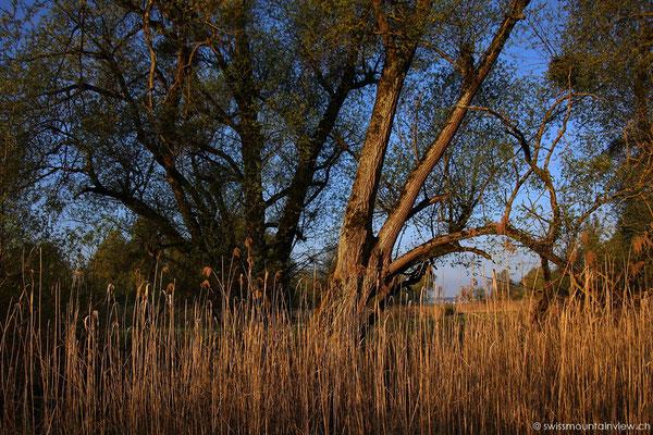 Naturschutzgebiet zwischen Unteruhldingen und Seefelden