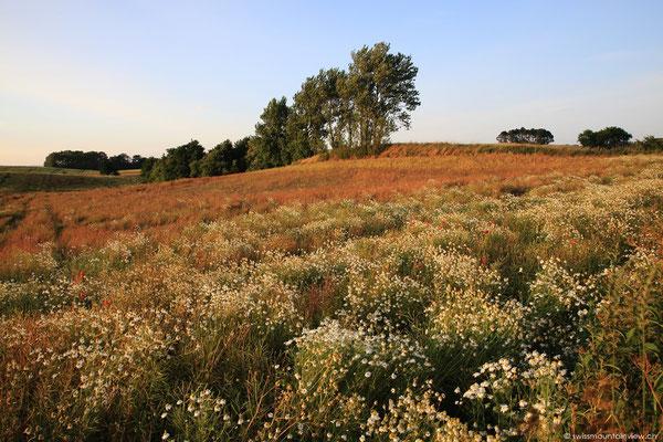 Wunderschöne Felder säumen die Strasse.