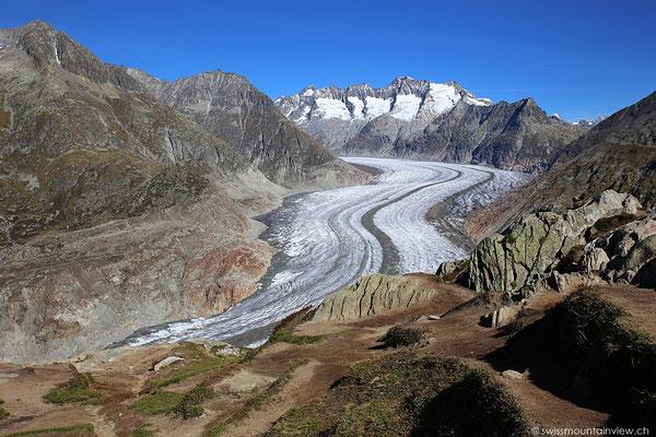 Nach ein paar Minuten empfängt uns dieser grandiose Ausblick auf den Aletschgletscher