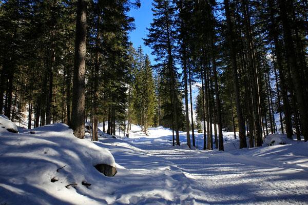 Durch den verschneiten Wald spaziere ich - praktisch allein - durch die herrlich verschneite Natur