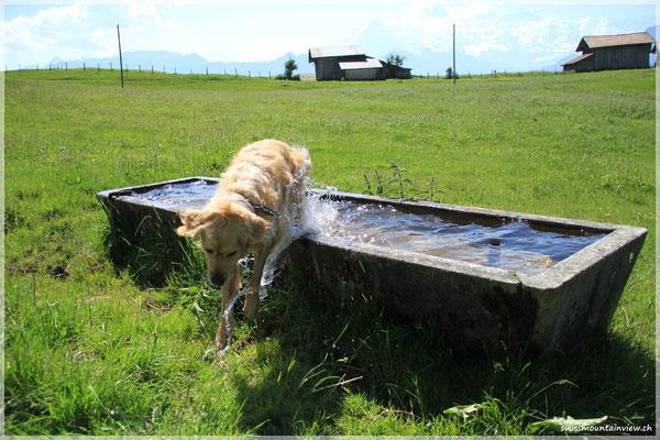 Danach folgt die Erfrischung im Brunnen.